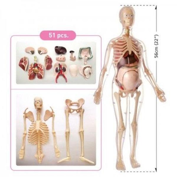 Anatomija Trudne Žene MK064 - ODDO igračke