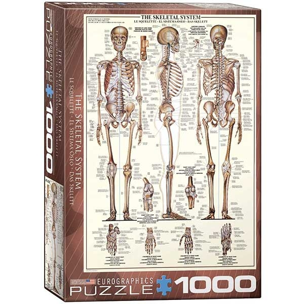 Eurographics The Skeletal System 1000-Piece Puzzle 3970 - ODDO igračke