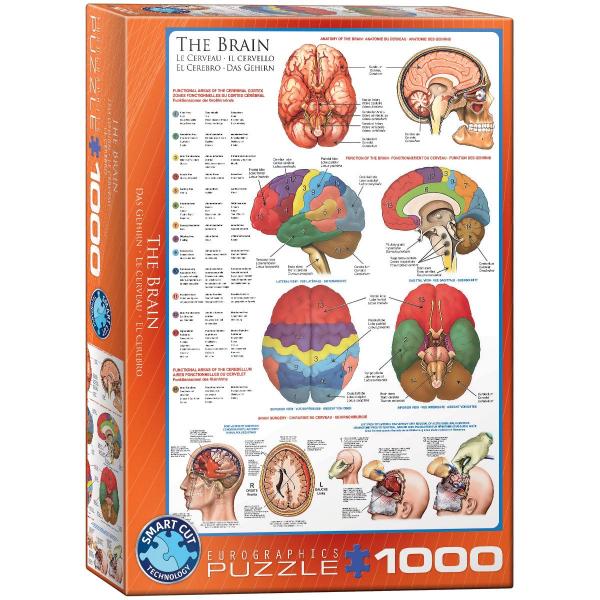 Eurographics The Brain 1000-Piece Puzzle 6000-0256 - ODDO igračke